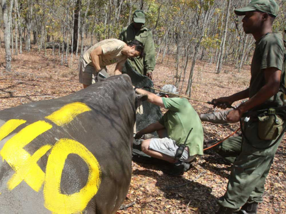 Wildlife crime scene exploitation, killed rhino Ranger Academy, the first e-learning platform specifically built for rangers and scouts | © Trouw 2016